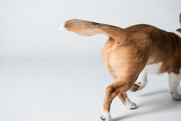 Kat Ku Photography_Studio Dogs_01