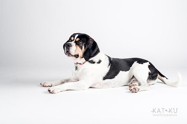 Kat Ku Photography - Jack the Beagle_05