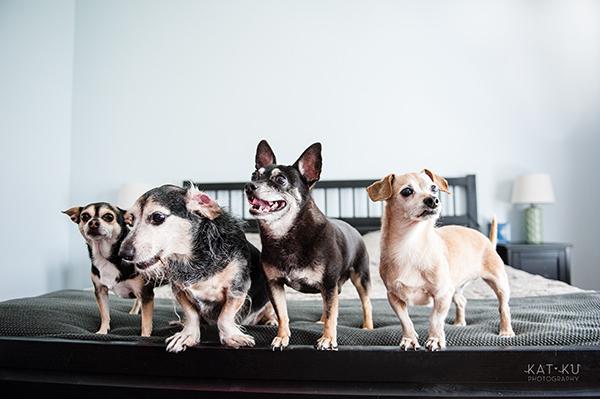 kat-ku-photography-detroit-michigan-dog-photos_06