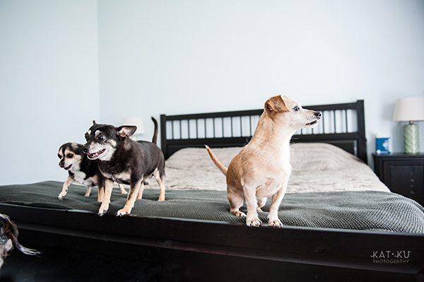 kat-ku-photography-detroit-michigan-dog-photos_07