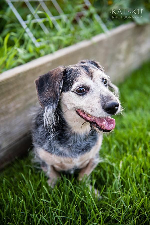 kat-ku-photography-detroit-michigan-dog-photos_24