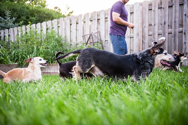 kat-ku-photography-detroit-michigan-dog-photos_26
