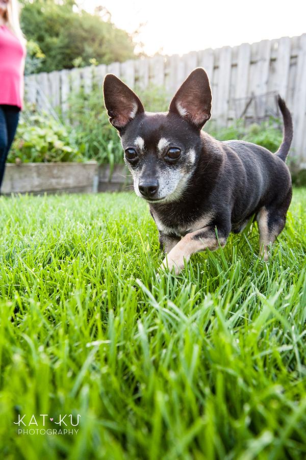 kat-ku-photography-detroit-michigan-dog-photos_28