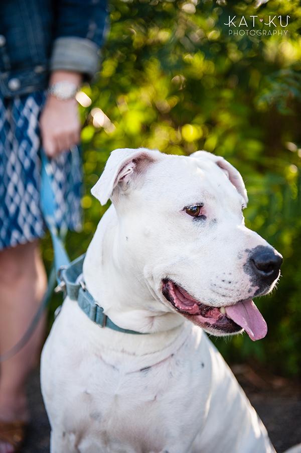 kat-ku-jake-heisenberg-detroit-dog-photos_02